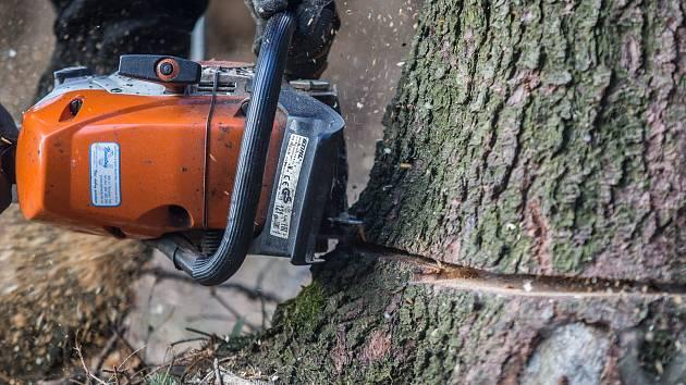 Na muže u Suchova na Hodonínsku dnes odpoledne spadl při kácení v lese strom. Ilustrační foto.