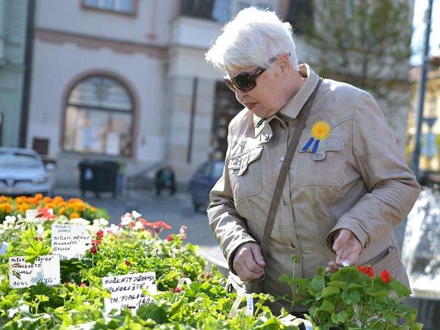 Koupí žluté květiny mohou opět lidé na mnoha místech republiky podpořit boj proti rakovině. Po Kolíně chodí několik dvojic slečen i mladých mužů, kteří květiny nabízí nejen v centru a okolí  náměstí.