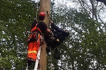 Záchrana ornitologa, který měl nehodu při kroužkování mláďat datla obecného na stromě v lese nedaleko Úval.