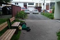 Opilec pod lavičkou v Kolíně.