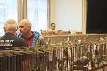 Z chovatelské výstavy poštovních holubů v kulturním domě v Tatcích.