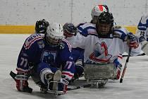 Z utkání sledge hokejové extraligy Kolín - Karlovy Vary (2:4).