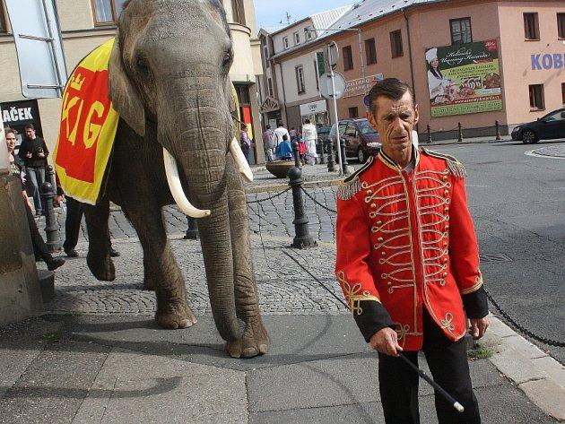 Slon v ulicích Kolína.