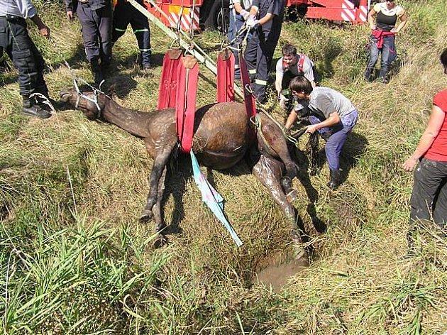 Kůň spadl do hlubokého potočního koryta. Na svobodu mu pomohli až hasiči s těžkou technikou.