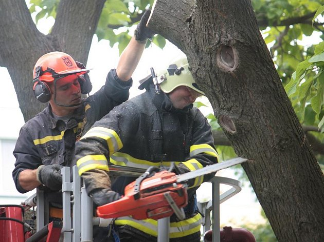 Kácení stromu v Dělnické ulici