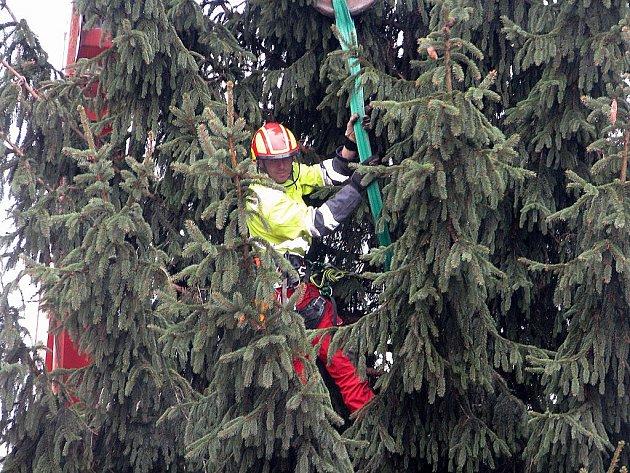 Usazování vánočního stromu na Karlově náměstí v Kolíně