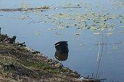 Hasiči v rámci cvičení hledali sudy s kyanidem. Trénovali na řece Labi v Klavarech u Kolína.
