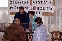 Chovatelé holubů  z východní části středních  Čech se se svými okřídlenými kamarády v sobotu setkali  v sále Staré hospody v Olešce.