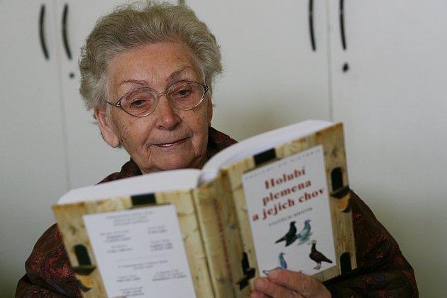 Kniha Holubí plemena
