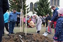 V Pečkách vysadili strom Olgy Havlové