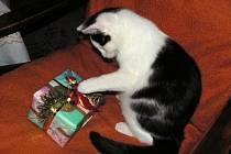 Také naši zvířecí kamarádi mají radost z dárků pod vánočním stromkem