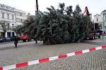 Na Karlovo náměstí v Kolíně dorazil vánoční strom.