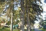 Fotografie situace před pokácením stromů v Chotuticích