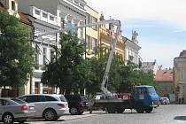 Strom na Karlově náměstí je opět upevněný.