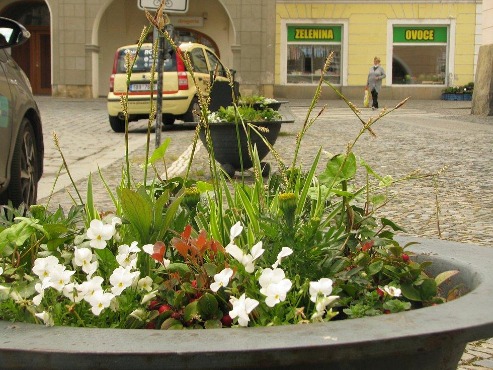 Květinová výzdoba na Karlově náměstí v Kolíně.