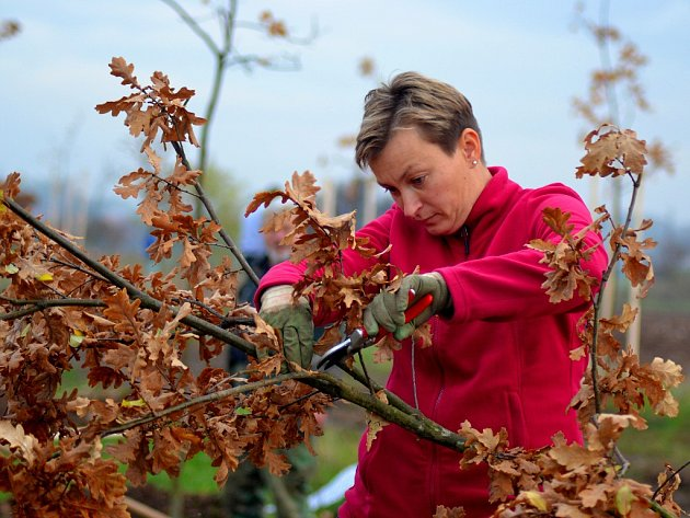 Na obnově dubové aleje se podílelo mnoho lidí z obce