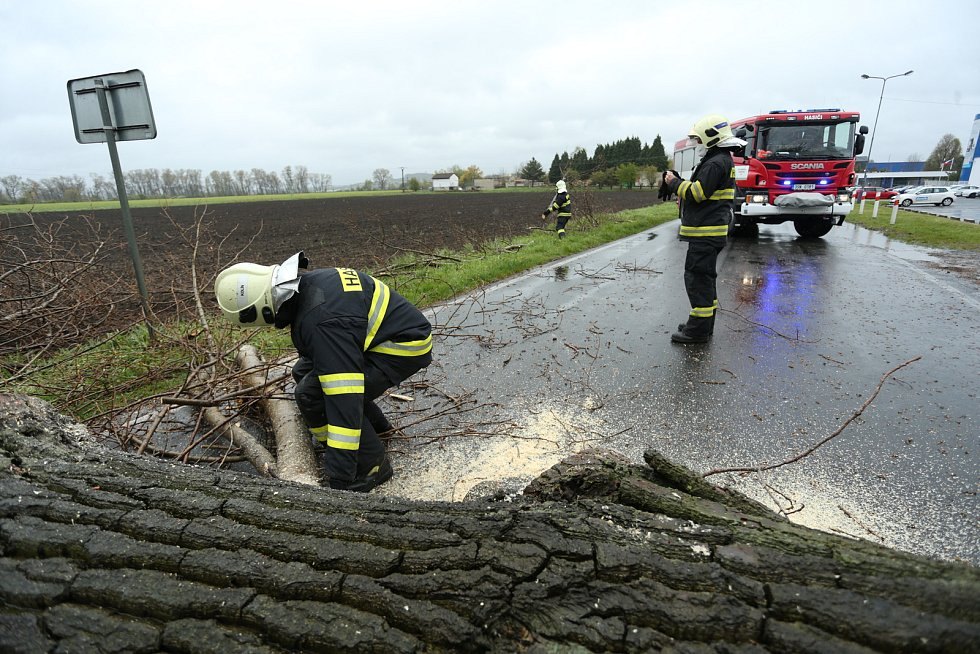 Hasiči likvidují padlý strom u Velimi v neděli 2. května 2021.