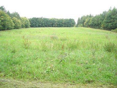 Na této louce v těsné blízkosti rybníku Strašík v budoucnu vyroste historický archeopark.