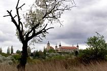 Místo zvané Gothard před výsadbou nového stromu