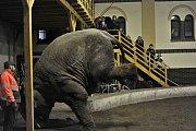 Kromě masek nechyběla ani zvířata z Cirkusu Berousek.