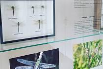 Nebuďte na vážkách a přijďte do muzea na vážky