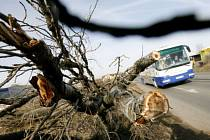 Orkán se vyřádil na stromech i budovách.