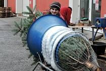 Kolik stojí vánoční strom?