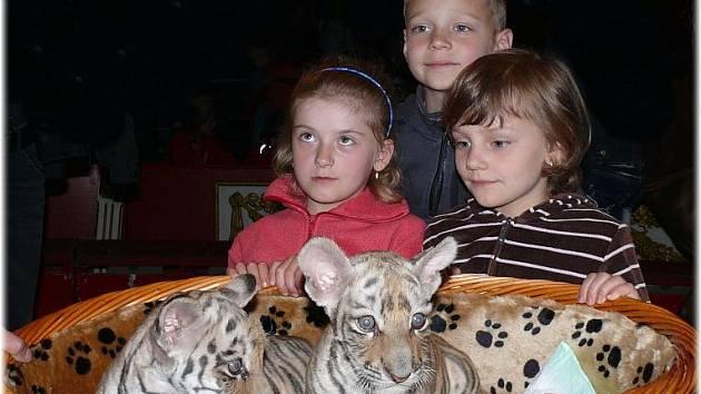 Mláďata tygra sibiřského