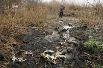 Rozkládající se těla zabitých zvířat pokrývají plochu několika čtverečních metrů.