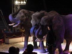 V manéži cirkusu Humberto předváděli kousky lvi, sloni i medvědi.