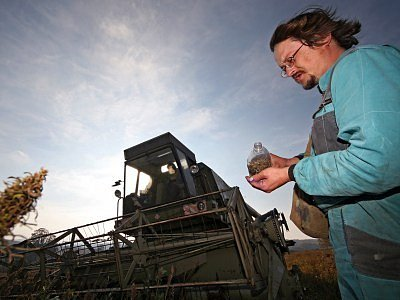 Zatímco dosud se zemědělci sucha spíše obávali, v době žní jej uvítají.