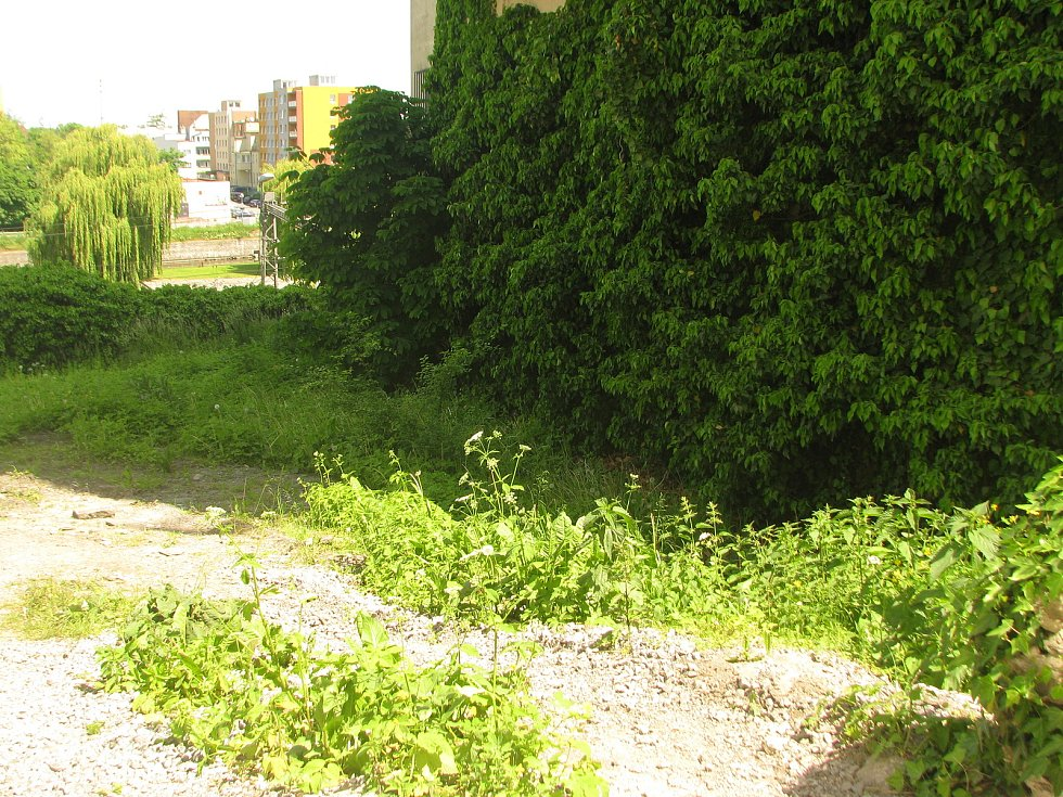 Zahrada za knihovnou, přilehlé náměstíčko i celá propojka až ke starému mostu projdou rekonstrukcí.