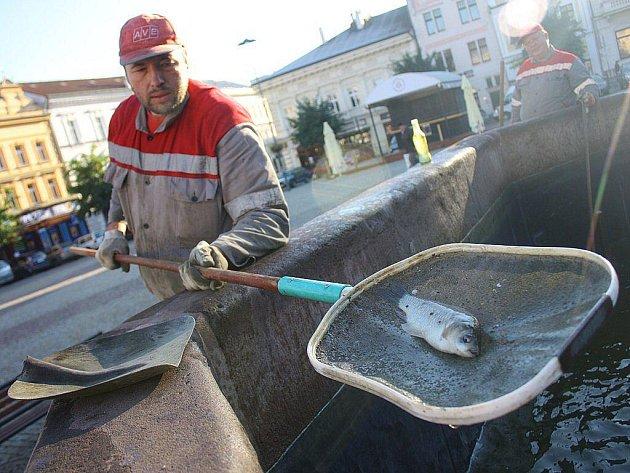 V kolínské kašně objevili pracovníci AVE dvacítku ryb