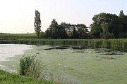 Lov kachen na rybníce v Chotouchově v plánovaném termínu nezačal