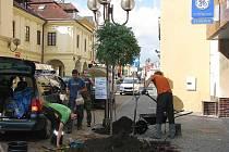 Sázení nových stromů v Kolíně