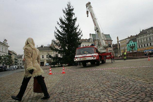 Strom, který letos bude stát na Karlově náměstí v Kolíně, rostl v Jabloňové ulici také v Kolíně.
