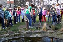 V pátek  večer se na  zahradě školy v Kostelci nad Černými lesy sešlo  přes třicet dětí ze  čtvrtých tříd s několika osmáky aby společně vysadili pohádkový strom.