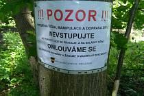Kácení v lesoparku Borky v Kolíně.