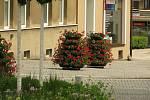 Květinová výzdoba v ulicích Kolína.