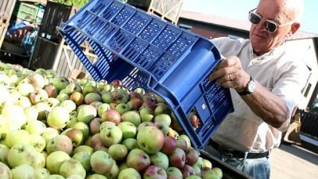 """Když byl úrodný rok, nechalo se za kilogram padaných jablek utržit 1,50 korun, nyní, v době """"ovocné krize"""" se cena zdvojnásobila.  Výkupny přijímají plo〜dy bez hniloby a plísně."""