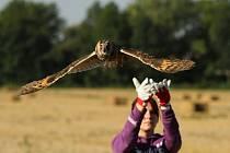 Vypouštění uzdravených či odchovaných živočichů zpět do volné přírody patří k těm nejkrásnějším okamžikům.