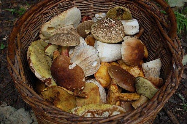 Se svými houbařskými úlovky se pochlubil i Jan Kobzáň. I on navštívil lesy u Uhlířské Lhoty.