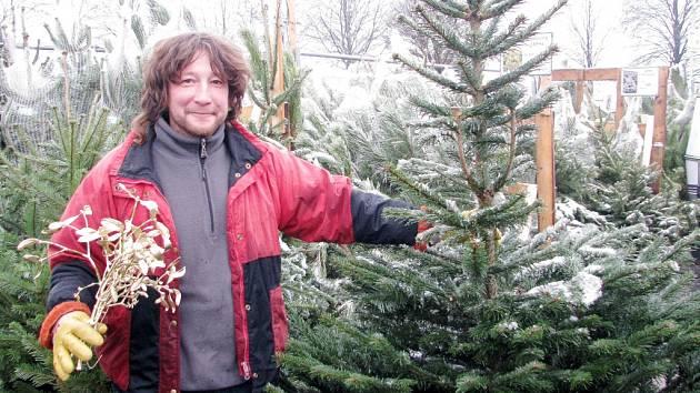 Prodej vánočních stromků v Kolíně
