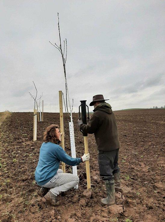 Výsadba stromů podél cesty u štolmířského podjezdu.