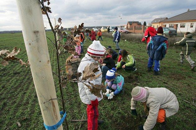 Děti vysadily stromky podél dobývacího prostoru ve Velkém Oseku