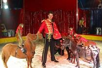 Jízda cvičených opic na hřbetech malých poníků patří mezi nejatraktivnější vystoupení Berouskova cirkusu Sultán.
