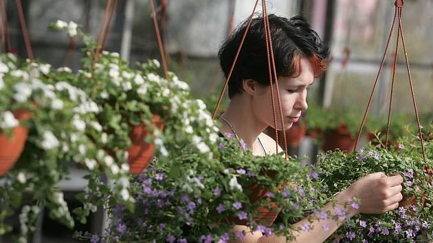 V Kolíně si mohou zájemci prohlédnout různé druhy květin určených pro výzdobu oken a balkónů nebo načerpat jarní inspiraci.