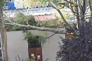 Větev, která spadla na výměník v ulici Vrchlického.