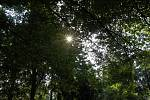 Kácení buku v českobrodském parku