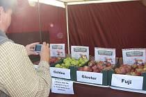 Značku Polabí - regionální produkt získává často ovoce a zelenina od místních pěstitelů, třeba taková jablka, jaká se pěstují v okolí Limuz.